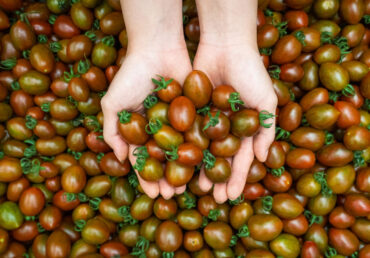 HEALTHY SNACKS WITH CHOCOLATE CHERRY TOMATOES