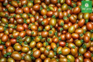 ăn cà chua sáng mắt