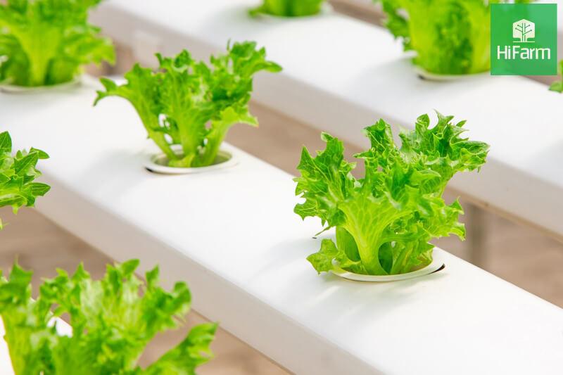 Các mô hình nông nghiệp công nghệ cao