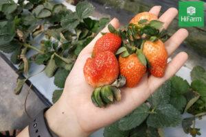 Đầu tư nông nghiệp công nghệ cao