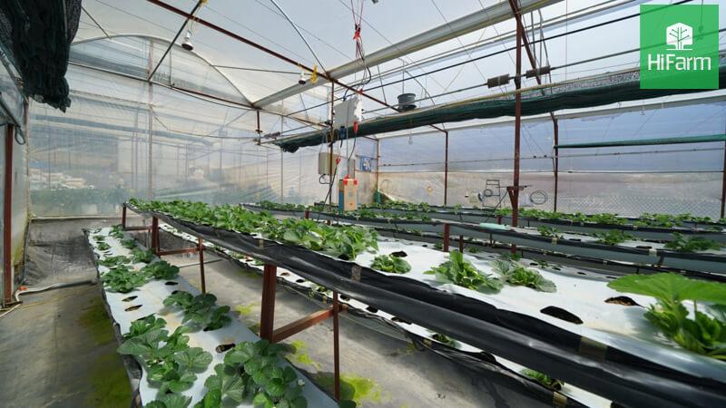 Làm giàu từ nông nghiệp công nghệ cao