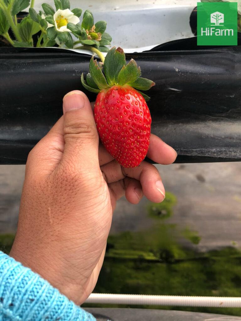 sản phẩm nông nghiệp ứng dụng công nghệ cao là gì