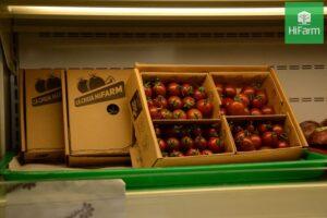 sau sinh có ăn được cà chua không