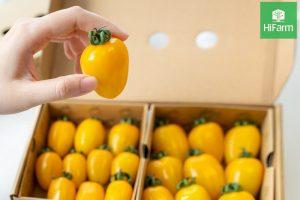 Cà chua bi vàng
