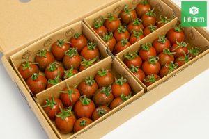 cà chua lâm đồng