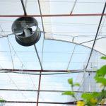 công nghệ cao trong nông nghiệp