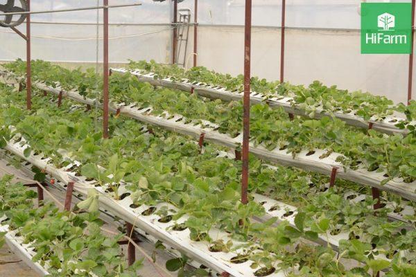 Doanh nghiệp nông nghiệp công nghệ cao