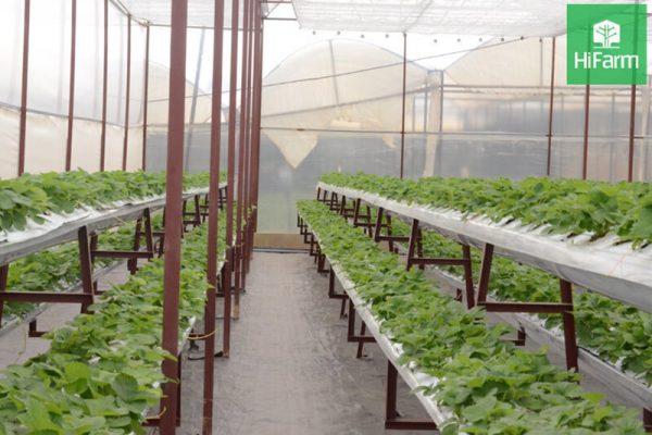 Giải pháp nông nghiệp thông minh: Nắm bắt xu hướng mới