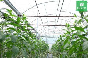 khái niệm mô hình nông nghiệp ứng dụng công nghệ cao
