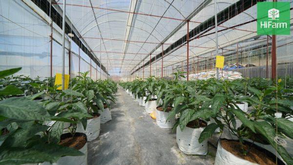Một số giải pháp phát triển nông nghiệp bền vững hiện nay