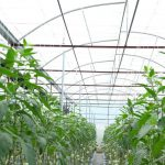 một số giải pháp phát triển nông nghiệp