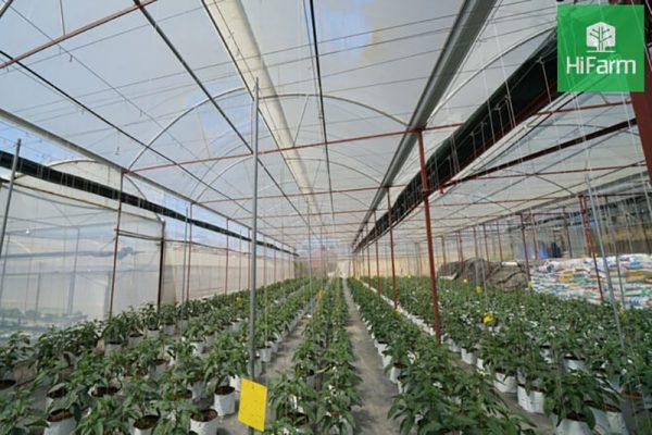 Ngành nông nghiệp công nghệ cao – Những thách thức đang gặp phải