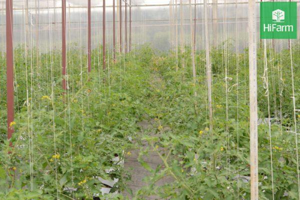 Ngành nông nghiệp công nghệ cao - Những thách thức đang gặp phải