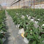 Nông nghiệp công nghệ cao Đà Lạt - Đòn bẩy phát triển kinh tế bền vững