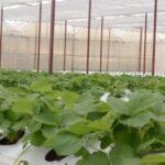 Nông nghiệp công nghệ cao ở Việt Nam liệu có thật sự dễ dàng