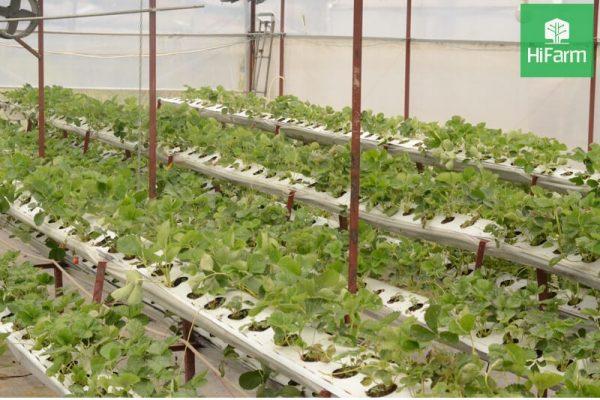 Nông nghiệp hiện đại công nghệ cao cải tiến vượt bậc nền nông nghiệp