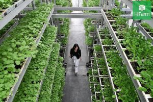 Nông nghiệp xanh thông minh