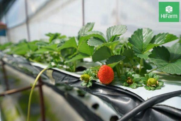 Sản xuất nông nghiệp công nghệ cao – Nông dân thu hàng tỷ đồng mỗi năm