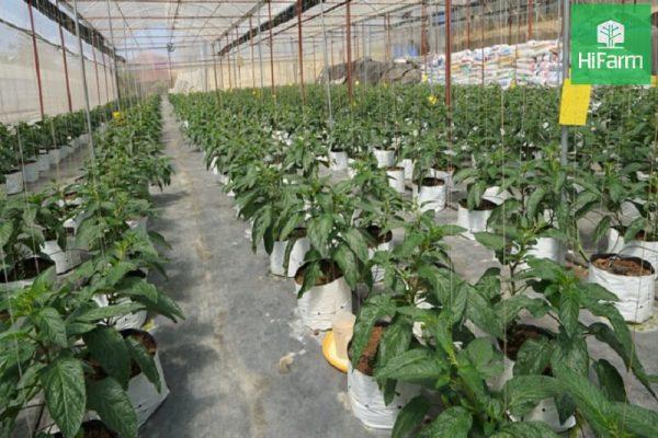 """Trang trại nông nghiệp công nghệ cao HiFarm tại """"thành phố ngàn hoa''"""