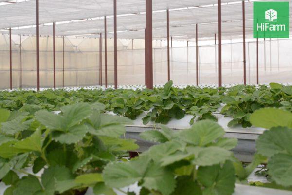 Ứng dụng công nghệ cao trong sản xuất nông nghiệp – Bí kíp tăng sản lượng đáng kể
