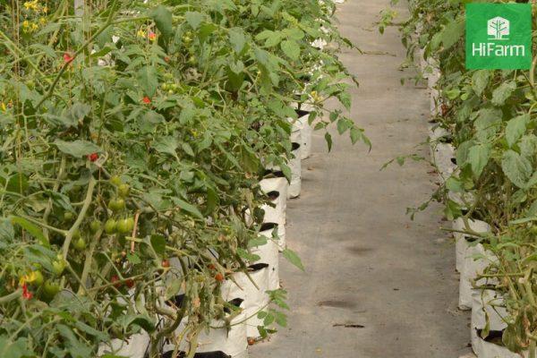 Ứng dụng công nghệ cao trong sản xuất nông nghiệp