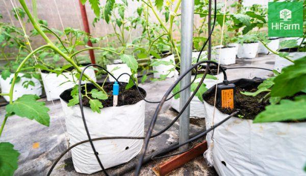 Ưu điểm của nông nghiệp công nghệ cao giúp đột phá năng suất