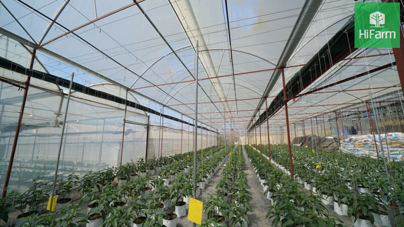 Vai trò của khu nông nghiệp công nghệ cao