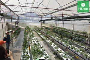 vùng sản xuất nông nghiệp công nghệ cao