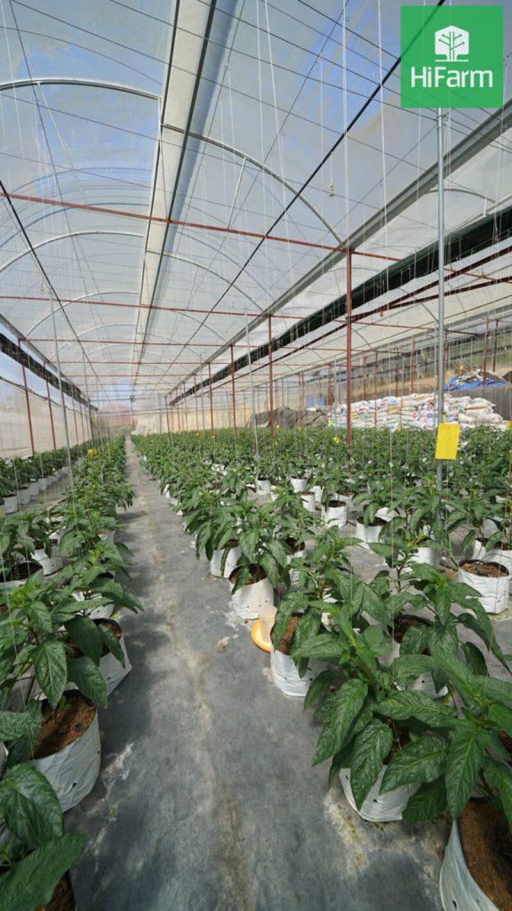 Nông nghiệp ứng dụng công nghệ cao tại Việt Nam
