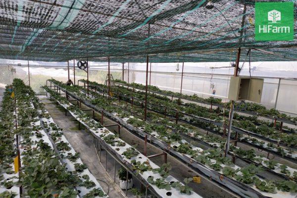 Nông nghiệp ứng dụng công nghệ cao tại Việt Nam liệu có dễ dàng