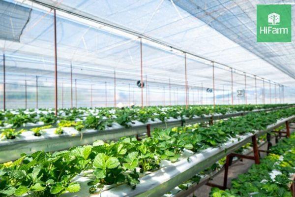 Điều gì xảy ra ở năm 2050 khi nền nông nghiệp vẫn chưa thay đổi?