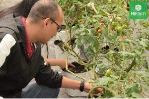 cách chăm sóc cây dâu tây