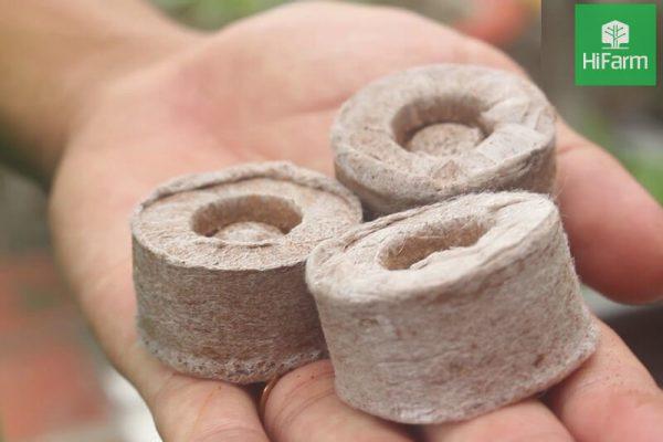 Cách ươm hạt dâu tây bằng viên nén hiệu quả có thể làm ngay tại nhà