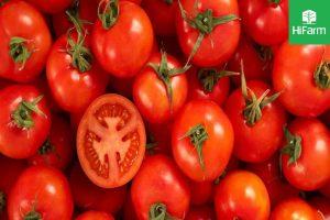 quả cà chua