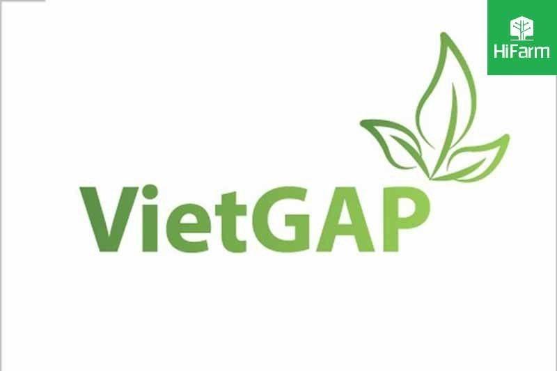 Tìm hiểu lịch sử hình thành VietGAP – tiêu chuẩn nông nghiệp Việt Nam