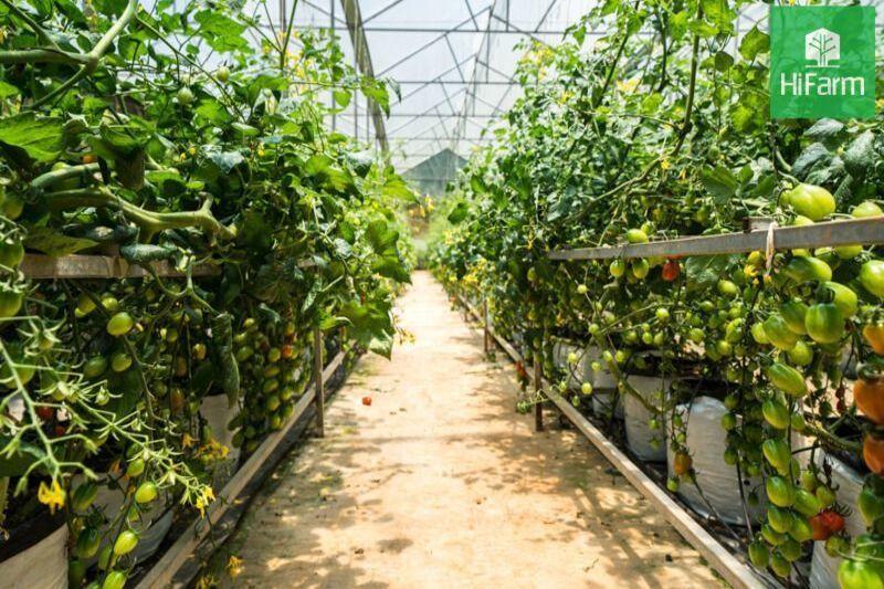 Lợi ích của VietGap đem lại cho thị trường sản xuất và tiêu dùng