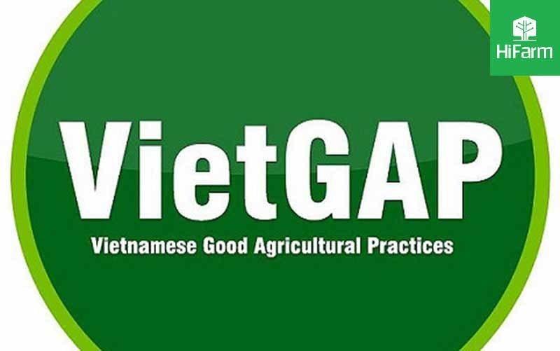 quy trình VietGap