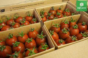 trị mụn bằng cà chua