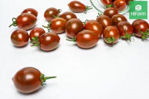 cà chua socola mua ở đâu