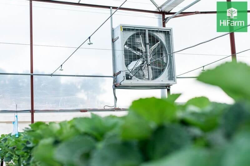 Rau VietGAP khác gì với rau hữu cơ? Giải pháp nông nghiệp 4.0 cho trồng trọt