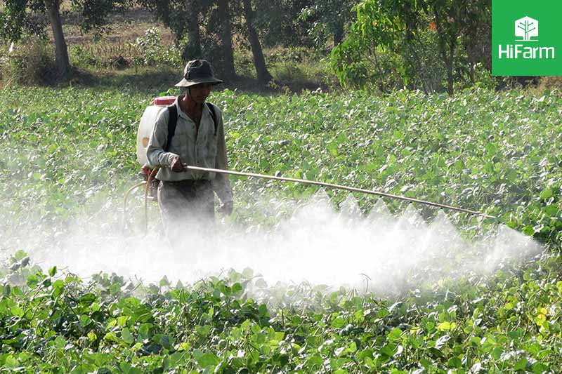 Lạm dụng thuốc bảo vệ thực vật