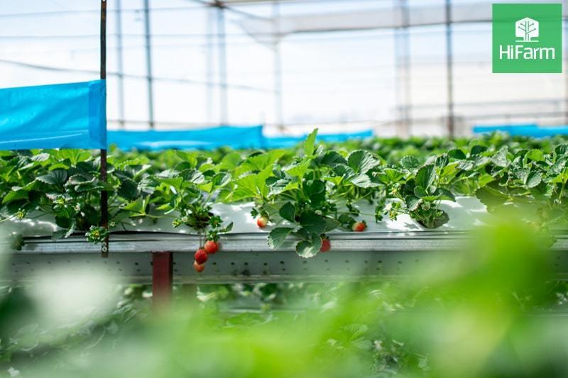 Ý tưởng về mô hình làm giàu từ nông nghiệp công nghệ cao