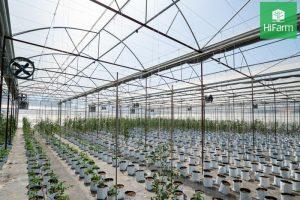 bảo vệ môi trường trong trồng trọt