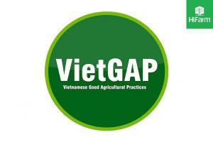 Nông sản HiFarm đạt chứng nhận VietGAP - Đây là tiêu chuẩn gì?