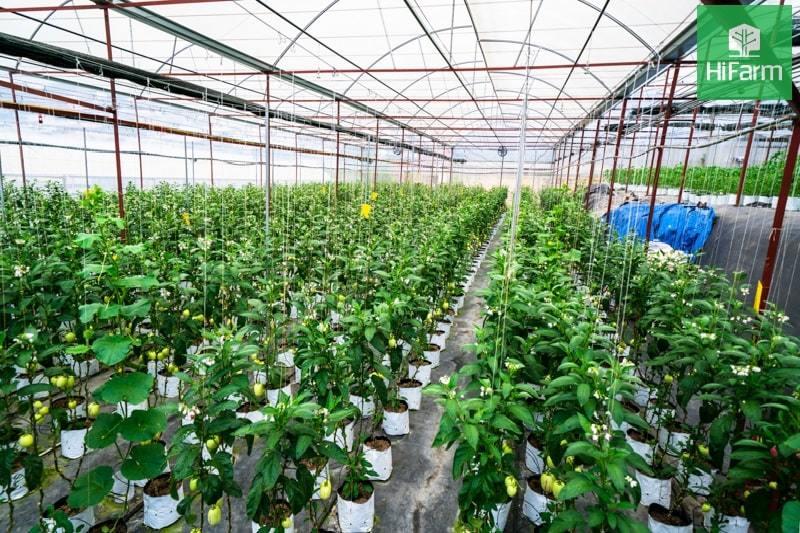 Đầu tư sản xuất nông sản sạch: Bài toán kinh doanh cho các nhà nông