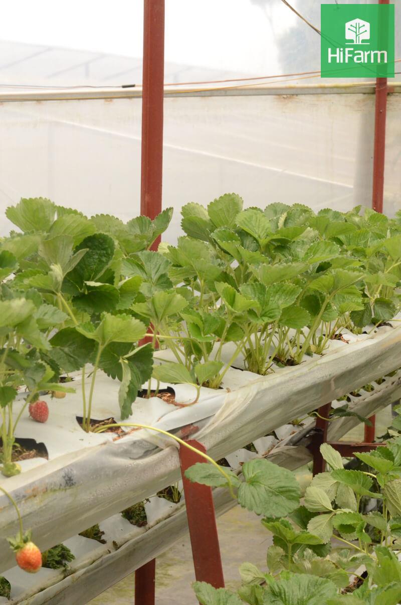 Lâm Đồng: Phấn đấu đứng đầu cả nước về nông nghiệp hữu cơ