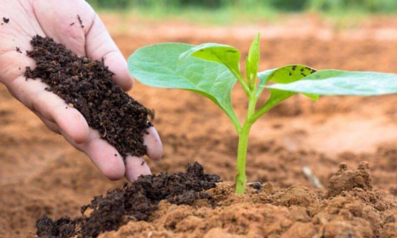 Những nguyên nhân chính gây 'bệnh chết chậm' trong trồng trọt