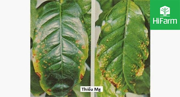 Các chất dinh dưỡng ảnh hưởng tới cây trồng