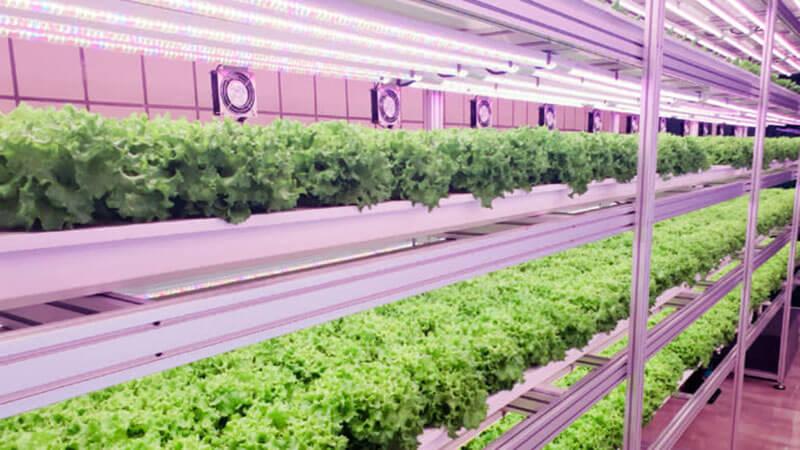 Trang trại dưới ga tàu điện ngầm - Tương lai của nông nghiệp Seoul