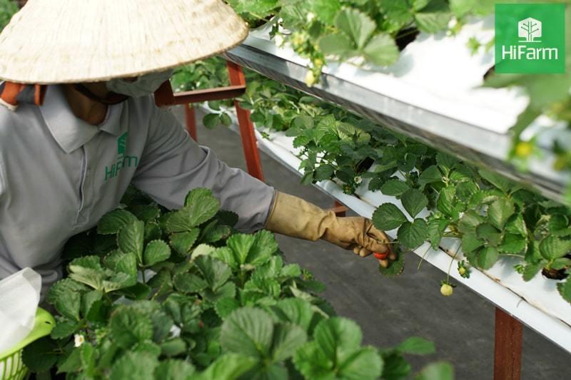 Các mô hình trồng rau sạch phổ biến nhất hiện nay